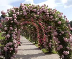 Rosenboegen, Rosengarten Beutig