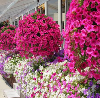 Blumen Lieferdienste Online Weltweit Verschicken Blog Archive